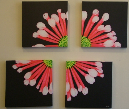 Fireworks Pink Chrysanthemum x4